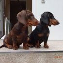 Kreidler's Dachsmagic Beautiful Lady und Black Velvet Touch