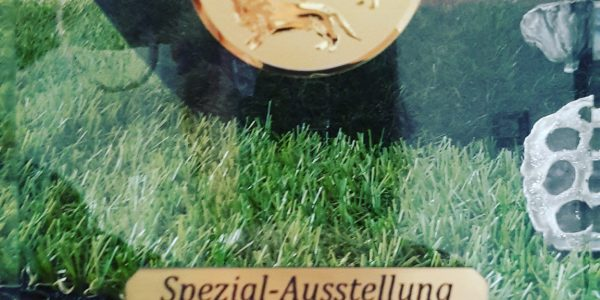 Spezialteckelschau Brühl 2018